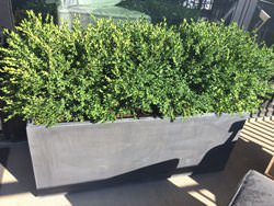 Dark patina zinc planters with flowers on a balcony