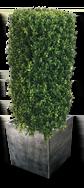 Zinc planter with dark patina finish